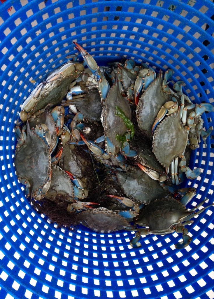 Crabs Blue Basket