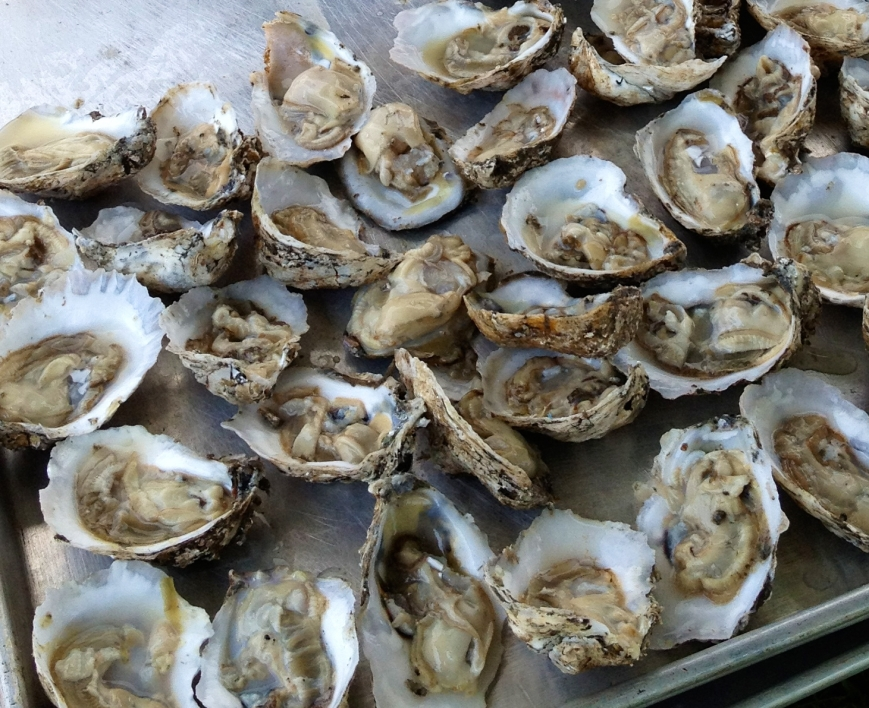 Oysters from LRNow 2012