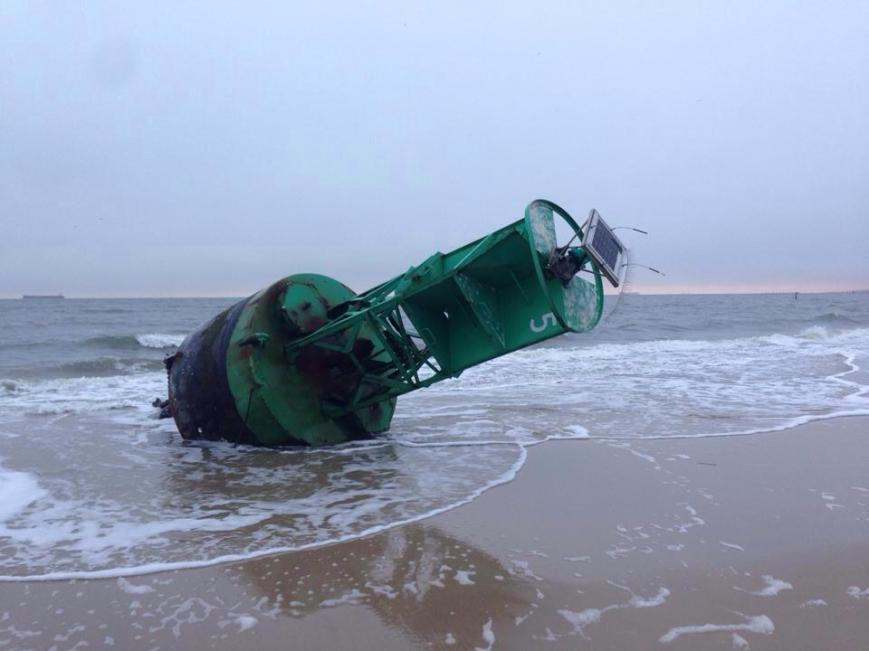 Washed up on Ocean Park beach! Photo Credit: Trista Riley Imrich of LRNow
